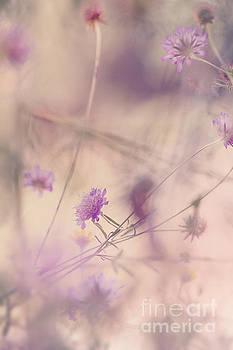 Spring Impressions by Ines Leonardo