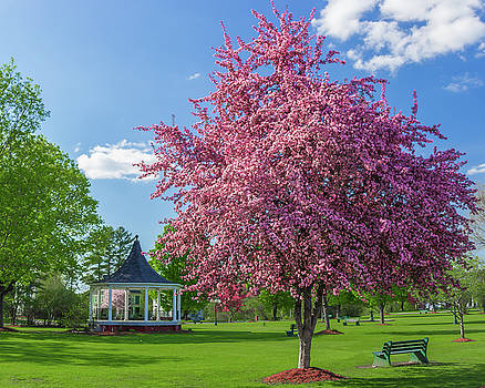 Spring in Bandstand Park by Tim Kirchoff