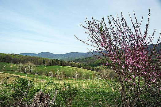 Spring in Blue Ridge by Helen Ellis