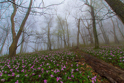 Spring in Blue Ridge by Steve Hammer