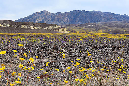 Spring In Death Valley by Dung Ma