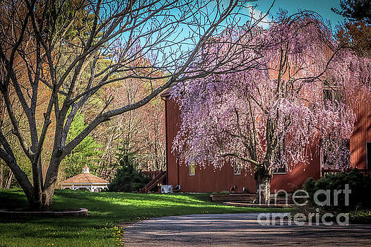 Spring in New England by Claudia M Photography