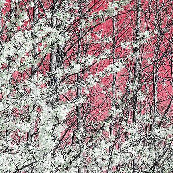Spring In Pink by Margaret Koc