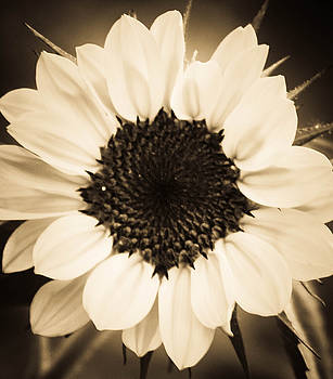Spring in Sepia by Dana  Oliver