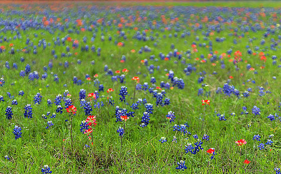 Spring In Texas by Bob Marquis