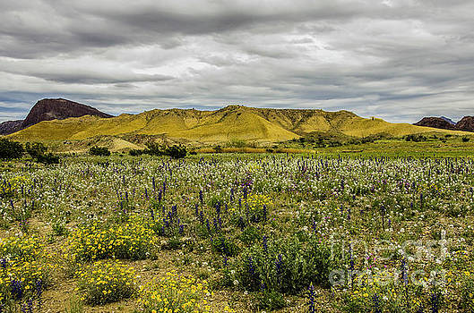 Spring In The Desert by Bob Marquis