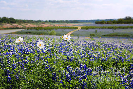 Spring in the Hill Country by Cathy Alba