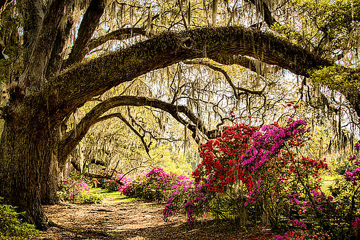 Spring in the Lowcountry 2 by Lynne Jenkins
