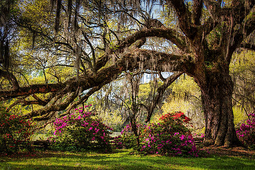 Spring in the Lowcountry by Lynne Jenkins