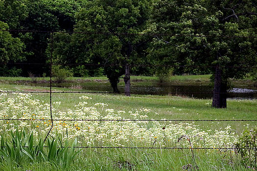 Spring in the Oklahoma Country Side by Sheila Brown