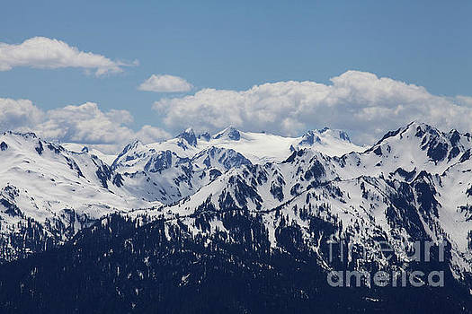 Spring in the Olympic Mountains by Jane Eleanor Nicholas