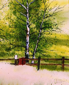 Spring In The Paddock by Diane Ellingham
