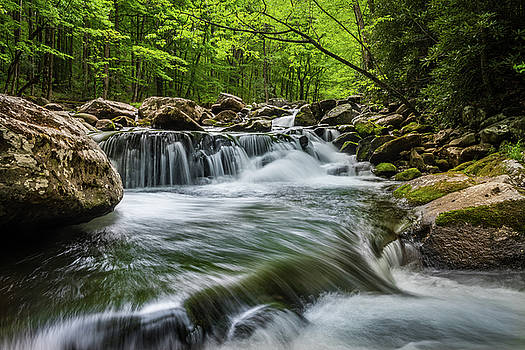 Spring in the Smokies by Mike Walker