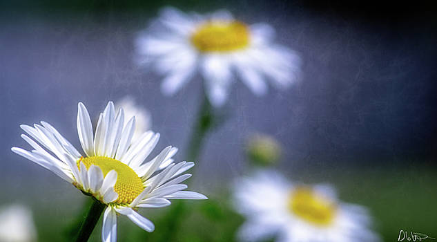 Spring Inspiration by Garvin Hunter