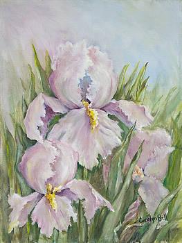 Spring Iris by Carolyn Bell