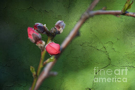 Spring is coming  by Claudia Ellis