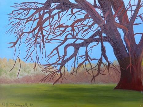 Spring is Coming by Dorothy Merritt