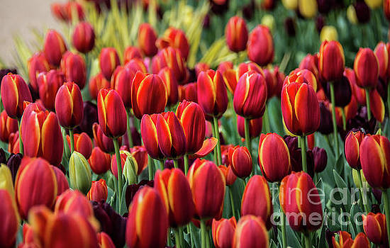 Spring is Here by Lisa L Silva
