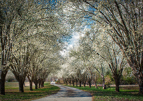 Spring is Here by Mark Guinn