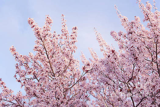 Spring is in The Air by Ana V Ramirez