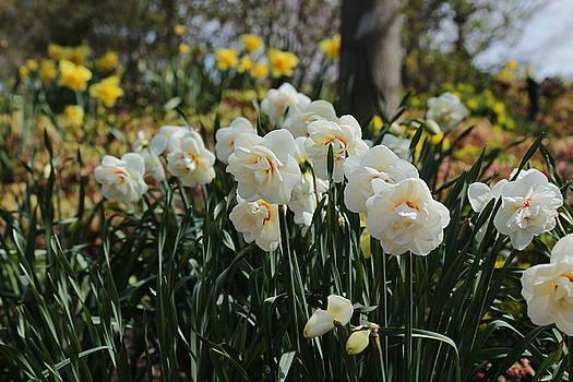 Rosanne Jordan - Spring Is In the Air