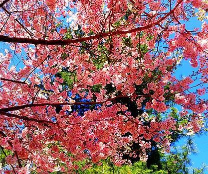 Spring by Jim Madigan