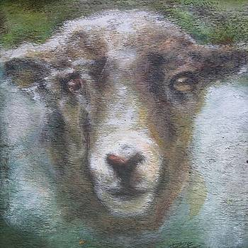 Spring Lamb by Donna Ellery