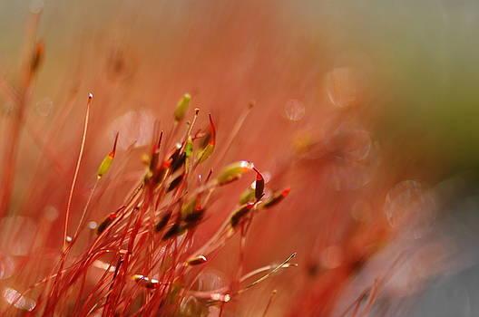 Spring Macro3 by Jeff Burgess