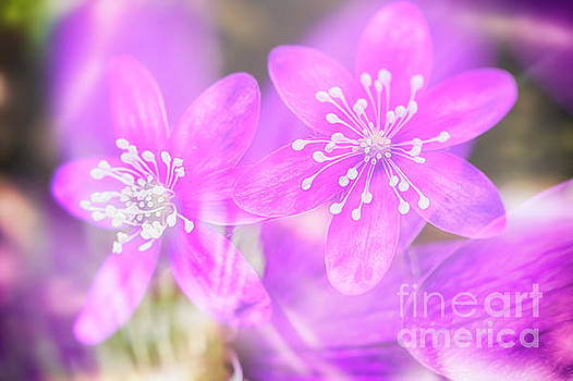 Spring magic 3 by Veikko Suikkanen