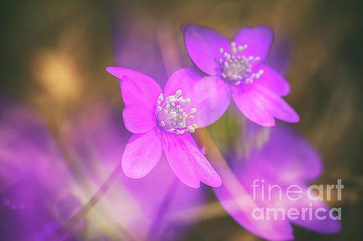 Spring magic 5 by Veikko Suikkanen