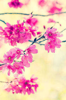 Spring Magic by Julie Andel