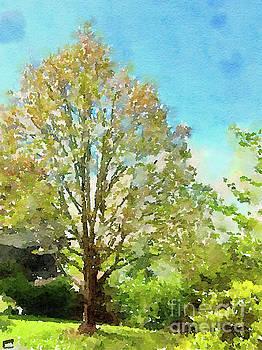 Spring Maple by Kerri Farley