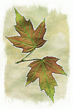 Spring maple leaves by Jim Wright