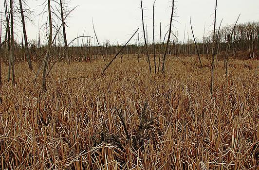 Debbie Oppermann - Spring Marsh Valens