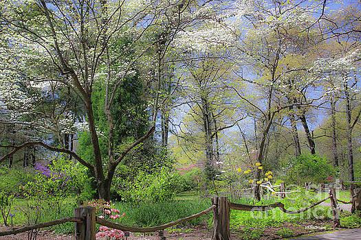 Spring Memphis Botanic Garden by Veronica Batterson