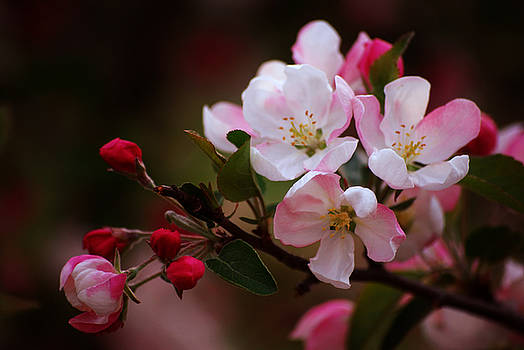 Michelle  BarlondSmith - Spring