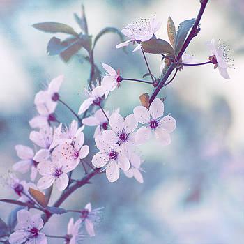 Spring by Mickael PLICHARD