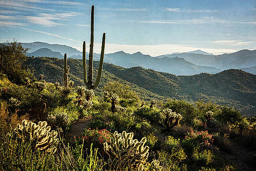 Saija Lehtonen - Spring Morning in the Sonoran