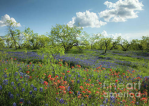 Spring Morning by Iris Greenwell