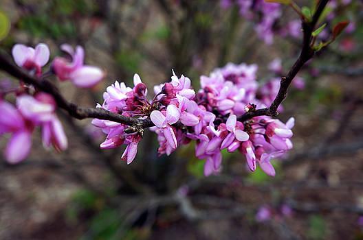 Spring by Natalya Shvetsky