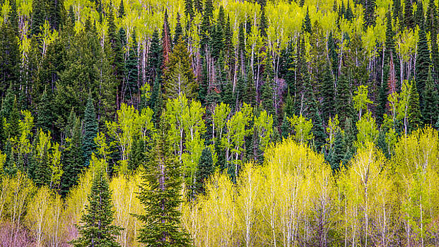 Spring on Grand Mesa by James Dudrow