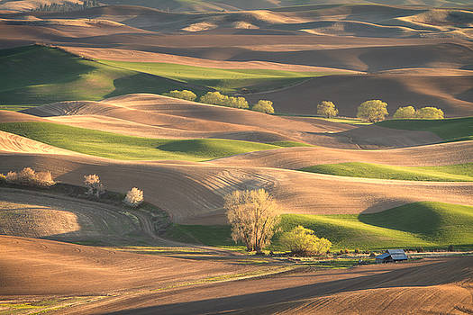 Spring on the Palouse by James Richman