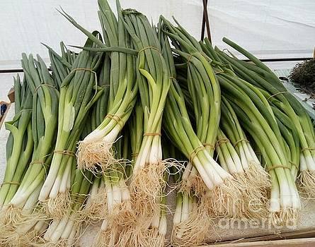 Spring Onions by Mudiama Kammoh
