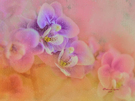 Spring Orchids by Marvin Spates