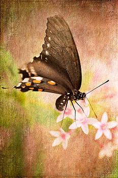Lois Bryan - Spring Pastel