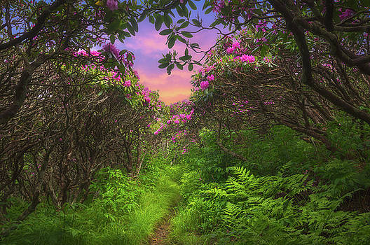 Spring Pathway by Dawnfire Photography
