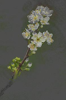 Rick Strobaugh - Spring Plum Blossoms