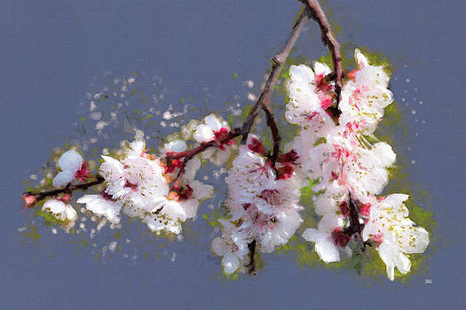 Spring Promise - Apricot Blossom Branch by Menega Sabidussi