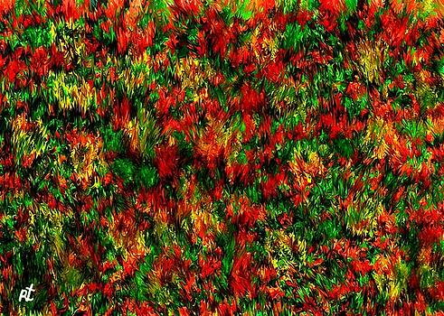 Spring by Rafi Talby