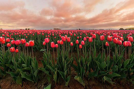 Spring Rainbow by Ryan Manuel